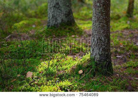 Beautiful Sunlit Autumn Forest Floor Closeup With Green Moss