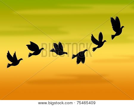 Flying Birds Represents Summer Time And Heat