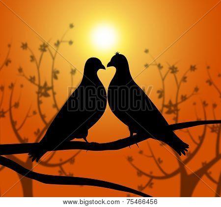 Love Birds Represents Heart Compassion And Boyfriend