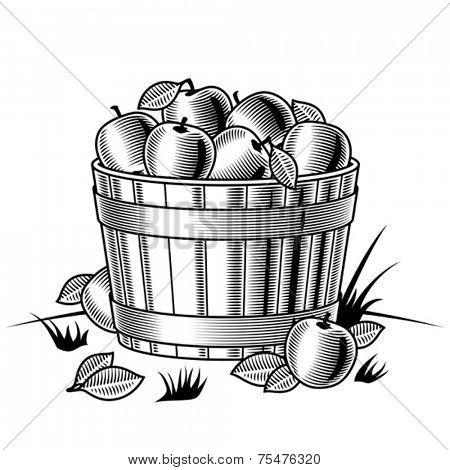 Retro bushel of apples black and white. Vector