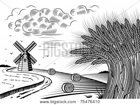 Wheat fields landscape black and white. Vector