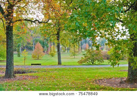 Colorful Autumn In Park