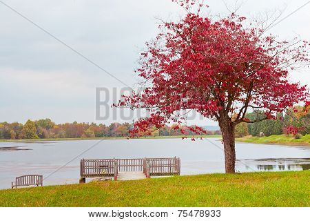 Lonely Autumn Tree Near Lake On Overcast Day.