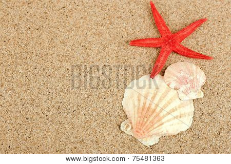 Starfish and seashell on sand background