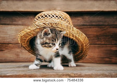 Curiosity Kitten Under The Hat