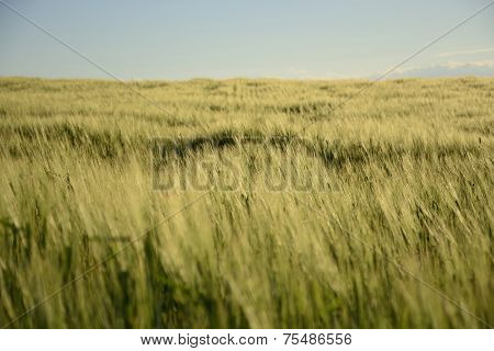 Outside The City - Rural Landscape - A Field