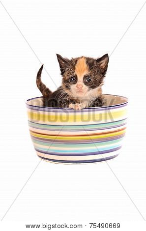 Calico Kitten In A Bowl