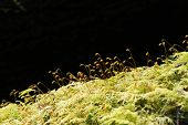 picture of spores  - Soft green mossy tree trunk with spores silhouetted - JPG