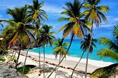 stock photo of bottom  - Topical Palms at Bottom Bay  - JPG