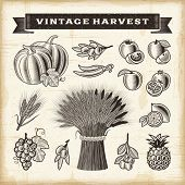 picture of bundle  - Vintage harvest set - JPG