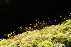image of spores  - Soft green mossy tree trunk with spores silhouetted - JPG
