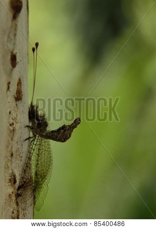Dragonfly Emerging On A Tree Trunk