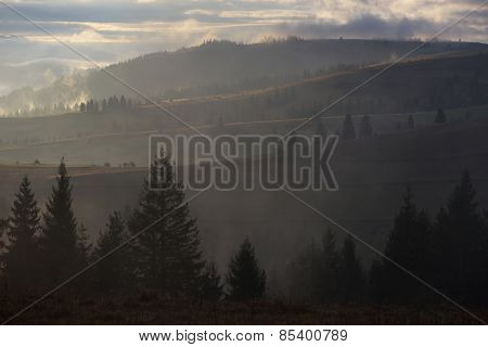 Morning in the mountains. Landscape with fog. Spruce forest on the slopes of the mountains. Beautiful sunlight
