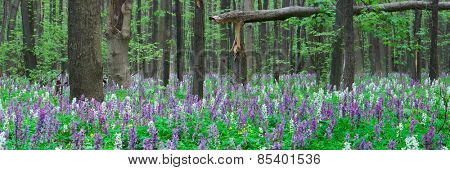Forest landscape panorama. Spring flowers. Beauty in nature