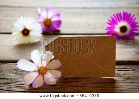 Empty Label With Copy Space With Cosmea Blossoms