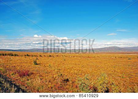 A permafrost field in alaska
