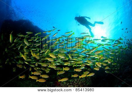 Scuba diving in oceaqn with fish