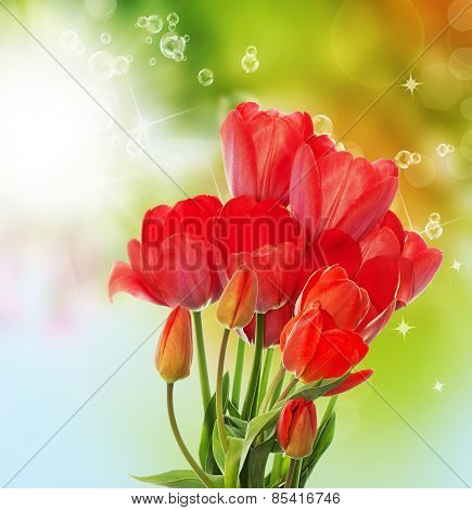 Beautiful  Fresh  Garden Tulips On Abstract Spring Nature Background