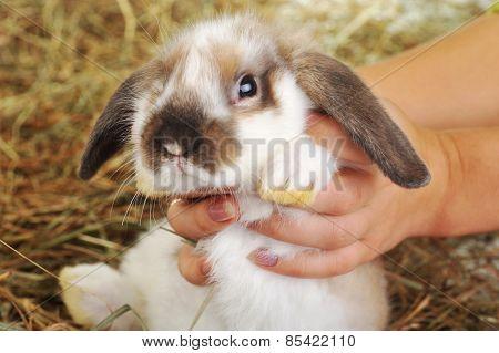 Rabbit On Hay