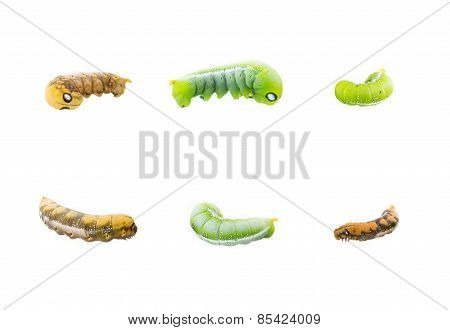 Collection Of Six Worms In Action