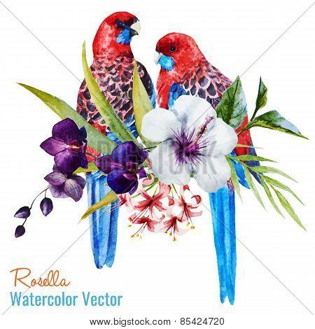 Nice birds