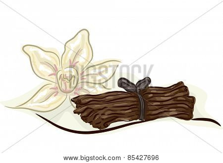 Illustration of a Bundle of Vanilla Stalks with a Vanilla Flower Beside It