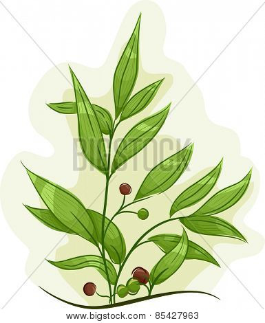 Illustration of a Tea Tree Plant with Healthy Leaves and Fruits
