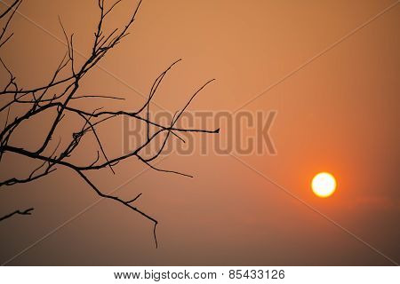 leafless branch of tree at sunset.