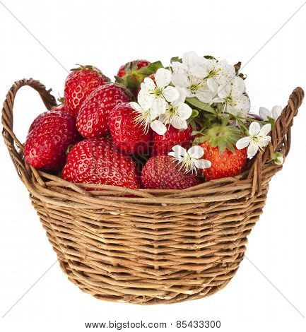 Sweet strawberry with flowers in basket isolated on white background