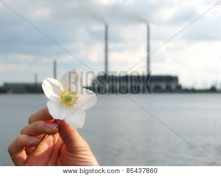 seascape, flower, plant