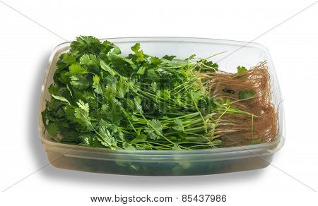 Parsley In Tray