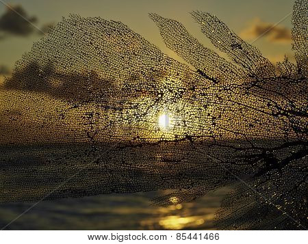 Photography Of Black Coral At Sunset Horizontal