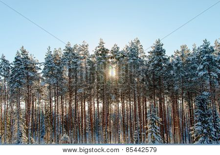 sunset over a winter forest
