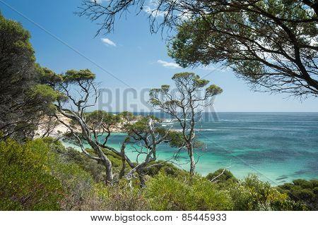 Ti-trees At The Beach