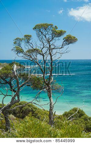 Ti-tree Over The Beach