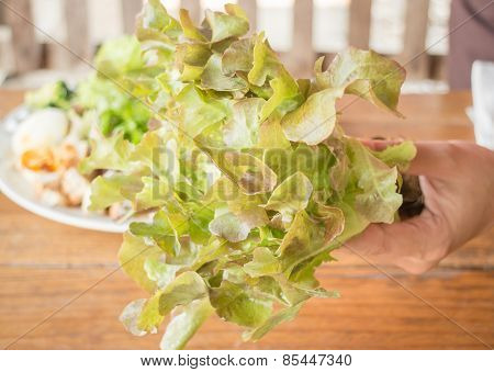 Hand Hold Fresh Hydroponic Red Oak Leaf