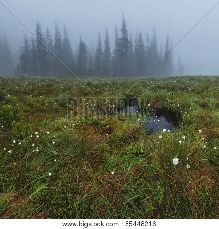 small bog in foggy meadow