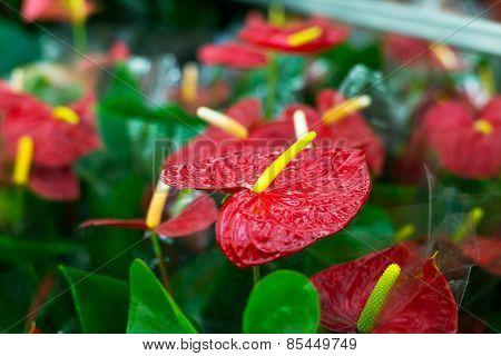 Beautiful Tropical Flowers in Flower shop