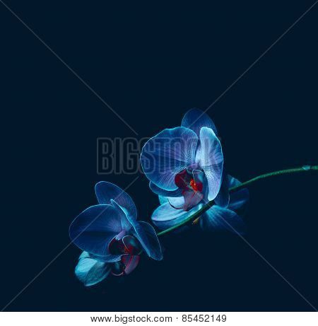 Orchid Flowers On Black Background