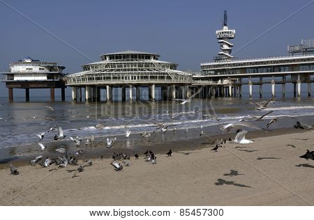 Seagulls Flying At The Beach Of Scheveningen