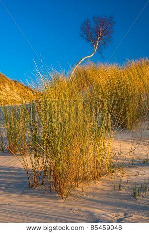 Dunes Landscape With Plants