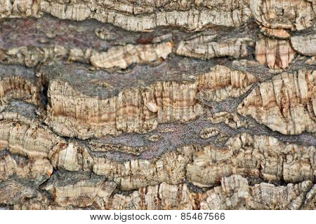 Bark of tree background