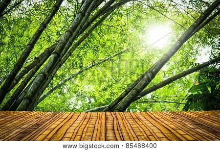 Bamboo Forest With A Floor