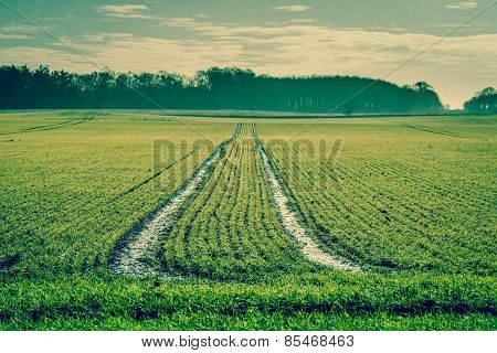 Tracks On A Green Field