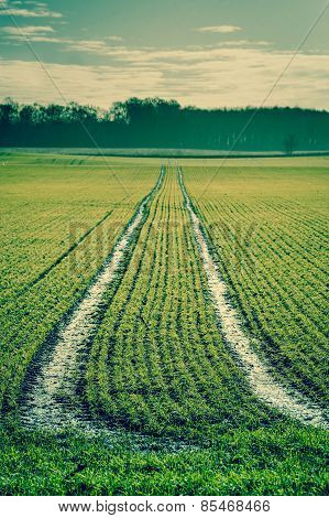 Green Field With Tracks