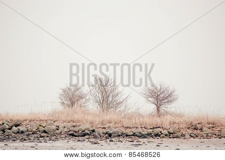 Trees In Calm Scenery
