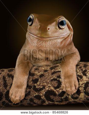Dog Frog