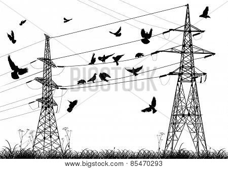 illustration with electrical pylons and birds isolated on white background