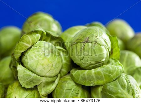 Brussels sprout . Close up in a sunny day