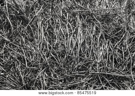 Brushwood Background